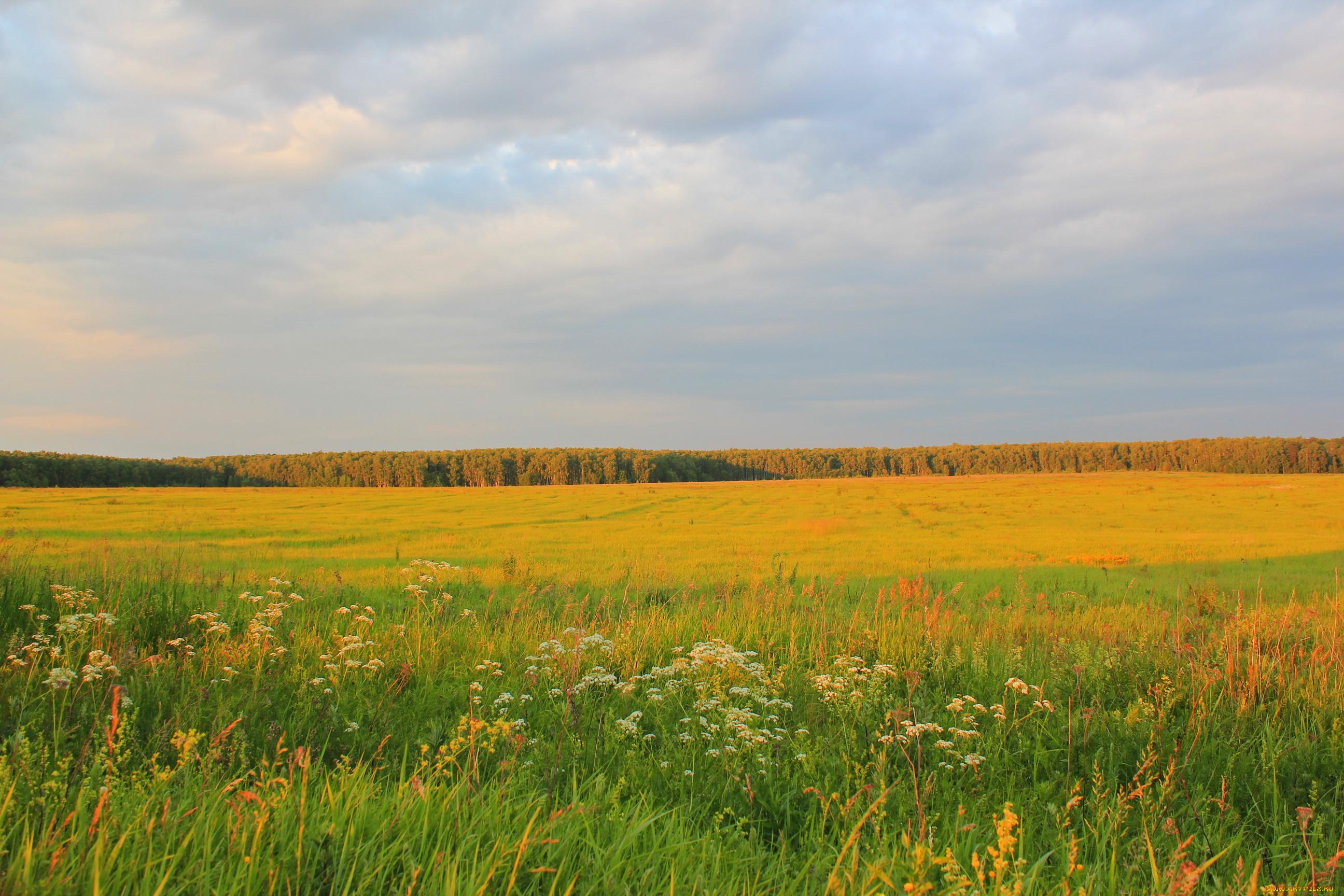 украинская лесостепь фотообои развесить рамы